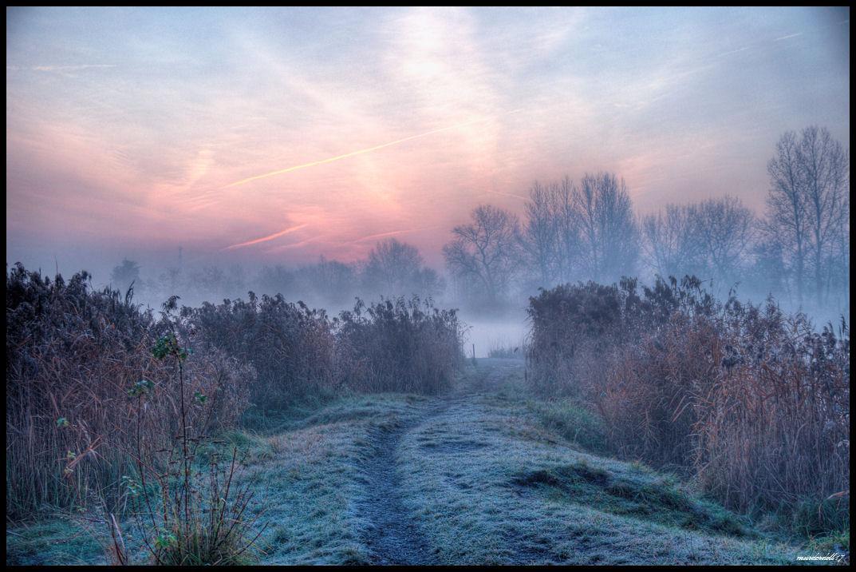 Misty morning by Murderdoll17