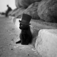 Meow by billomekishkokaulitz