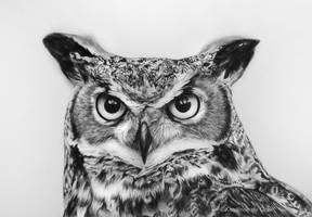 Owl by kansineedegraefart