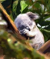 Koala by Fievy