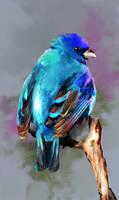 BlueBird2 by Fievy