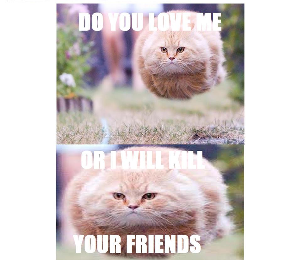 _love_me__flying_ball_cat_meme__by_me__by_catloulie dauq57y love me (flying ball cat meme) by me* by catloulie on deviantart