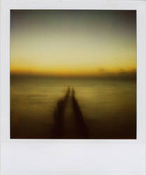 muelle by MAOB