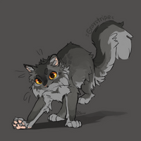 Graystripe by GrayPillow