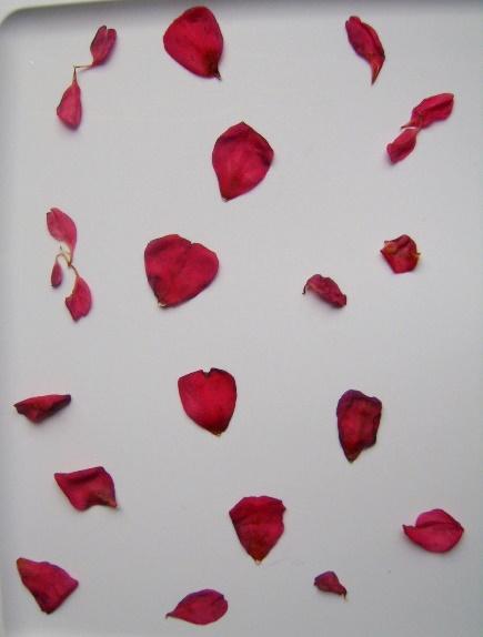 Petals 2 by juniper-stock