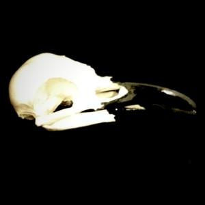q-t-r-nevermore's Profile Picture