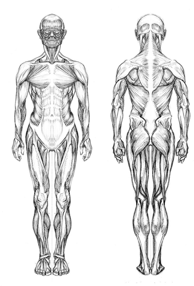 Black Full Human Body Diagram Free Vehicle Wiring Diagrams Blank Outline Anatomy Study Male By Usma1000 On Deviantart Rh Com