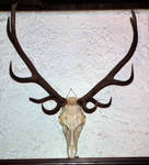 Antlers 02