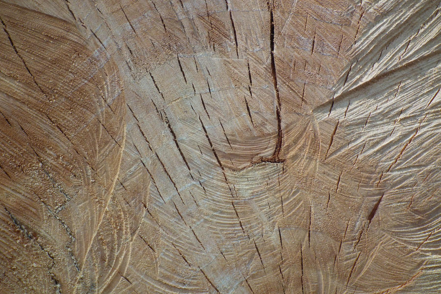Cut Tree 02