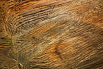 Wood Texture 18