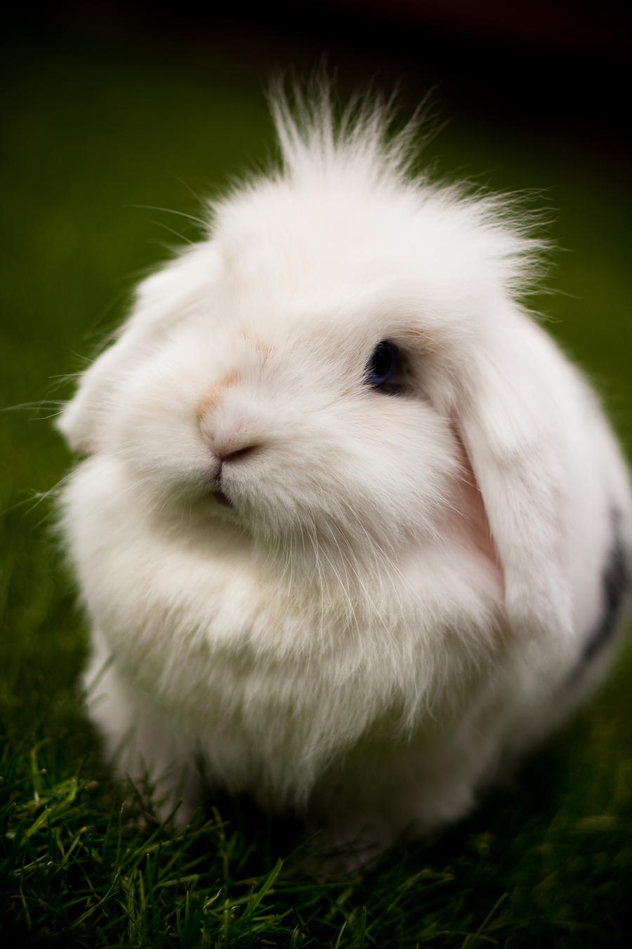 Maji svatki za gnjaviti...[Ne zamerite mi...] Snowyyy_Rabbit_by_bartoszwozniak