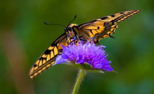Butterfly World by BWozniakPhotography