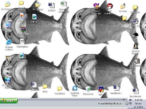 Alligator fetus screenshot