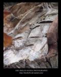 Stock Tree Bark by Theshelfs