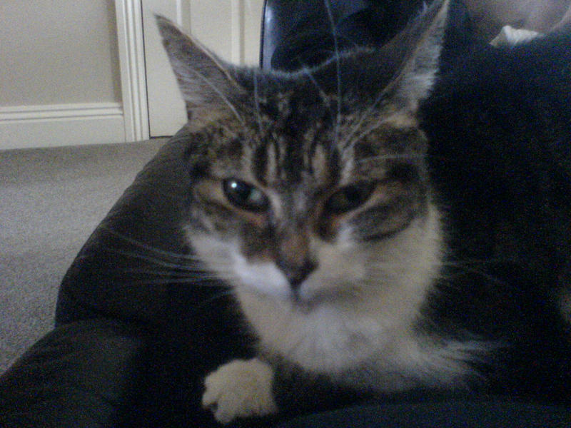mad pussy cat stock by Theshelfs