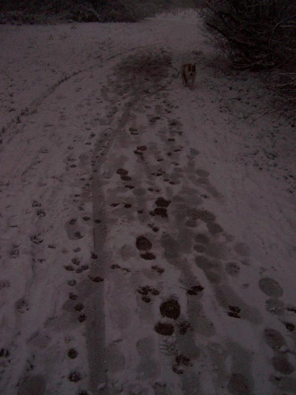 Snow path stock by Theshelfs