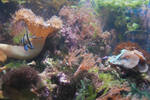 Coral Stock 2 by Theshelfs