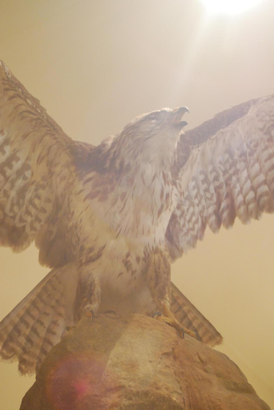BIRD STOCK 4 by Theshelfs
