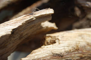 TREE BARK STOCK 6 by Theshelfs