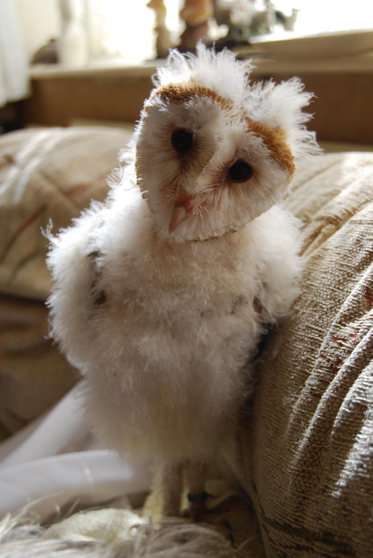 BARN OWL BABY STOCK 2 by Theshelfs on DeviantArt