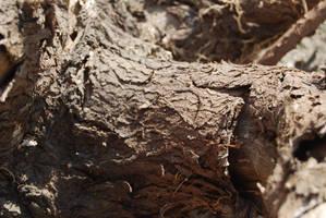 TREE BARK STOCK 5 by Theshelfs
