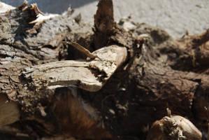 TREE BARK STOCK 7 by Theshelfs