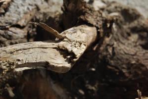 TREE BARK STOCK 3 by Theshelfs