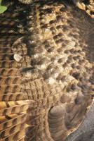Owl Wing STOCK by Theshelfs