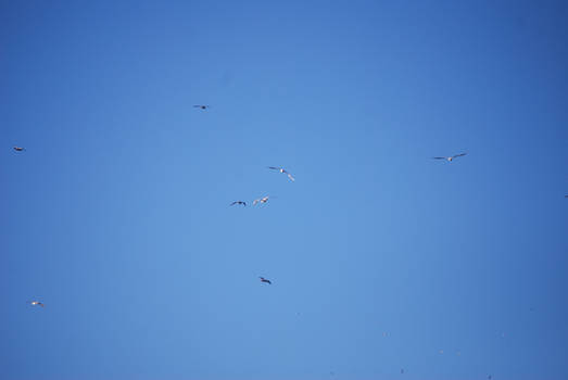 BIRDS IN FLIGHT STOCK