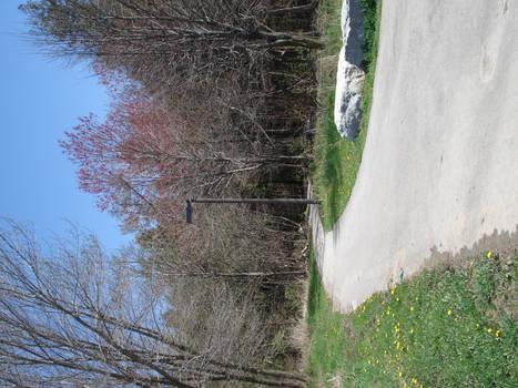 Winding Road_Spring 2011