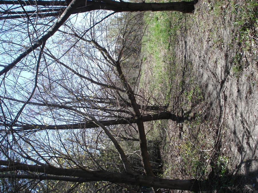 Trees_Spring 2011