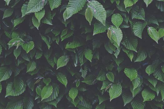 darken green