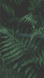 Better Green. by Prolite