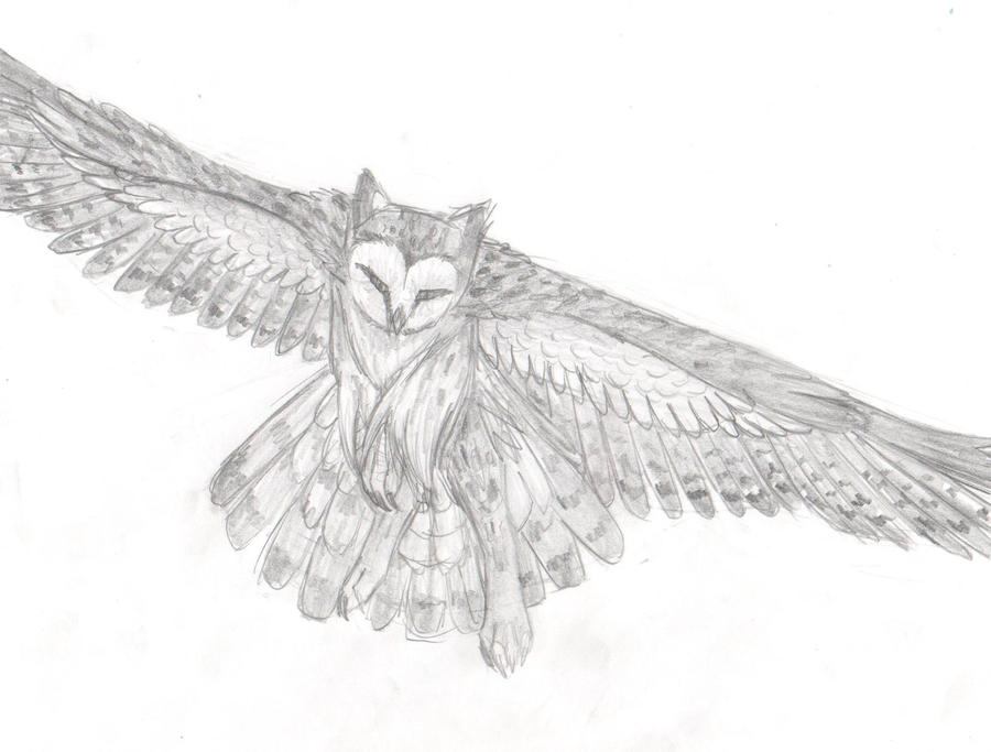 Flying owl pencil drawings - photo#20