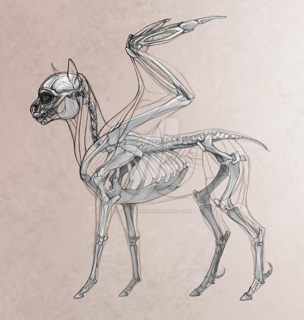 My Little pony Headcannon Example: Pegasi Anatomy by turnipBerry