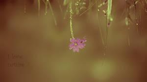 I love nature