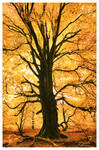 the burning tree by garrit