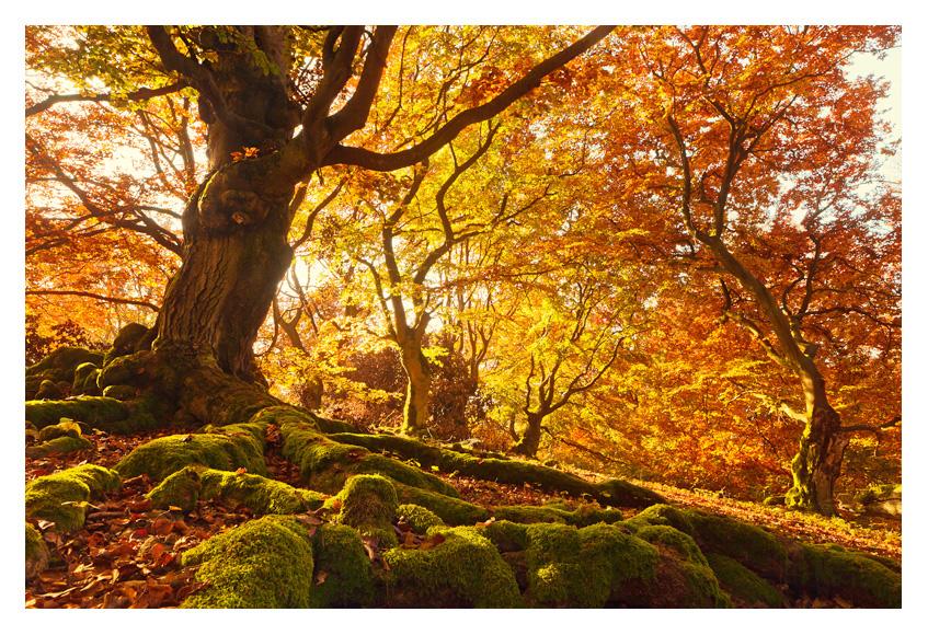 Autumn flames by garrit