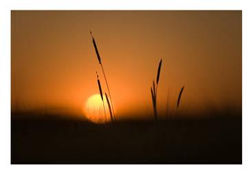 The last light by garrit