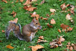 London Tree Squirrel