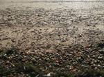 Texture: Sand Pebbles I