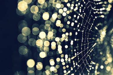 Web Bokeh by inertia09