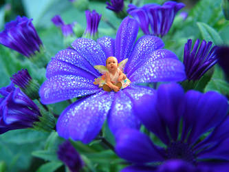 Flower Child by stormXstorm
