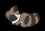 Raccoon sleeping