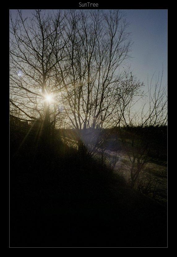 SunTree in Aalborg by danzka