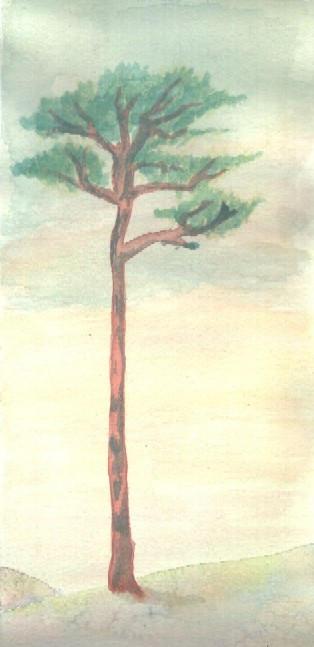 Pine in Watercolor by danzka