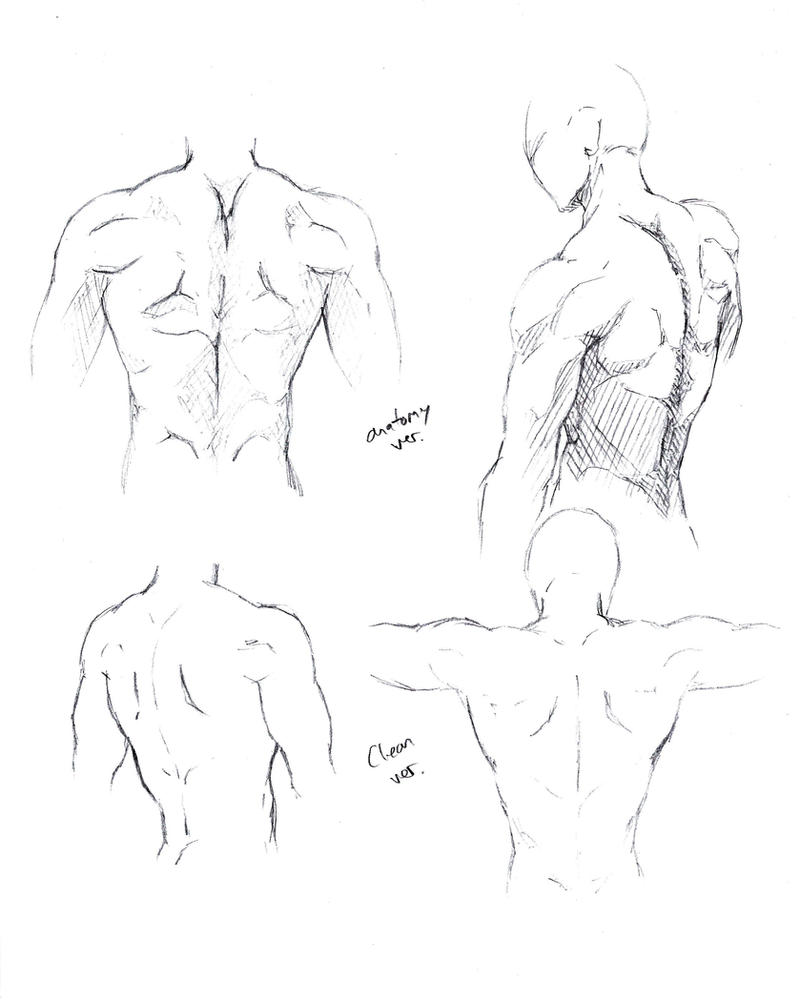 Male Torso back by shinsengumi77
