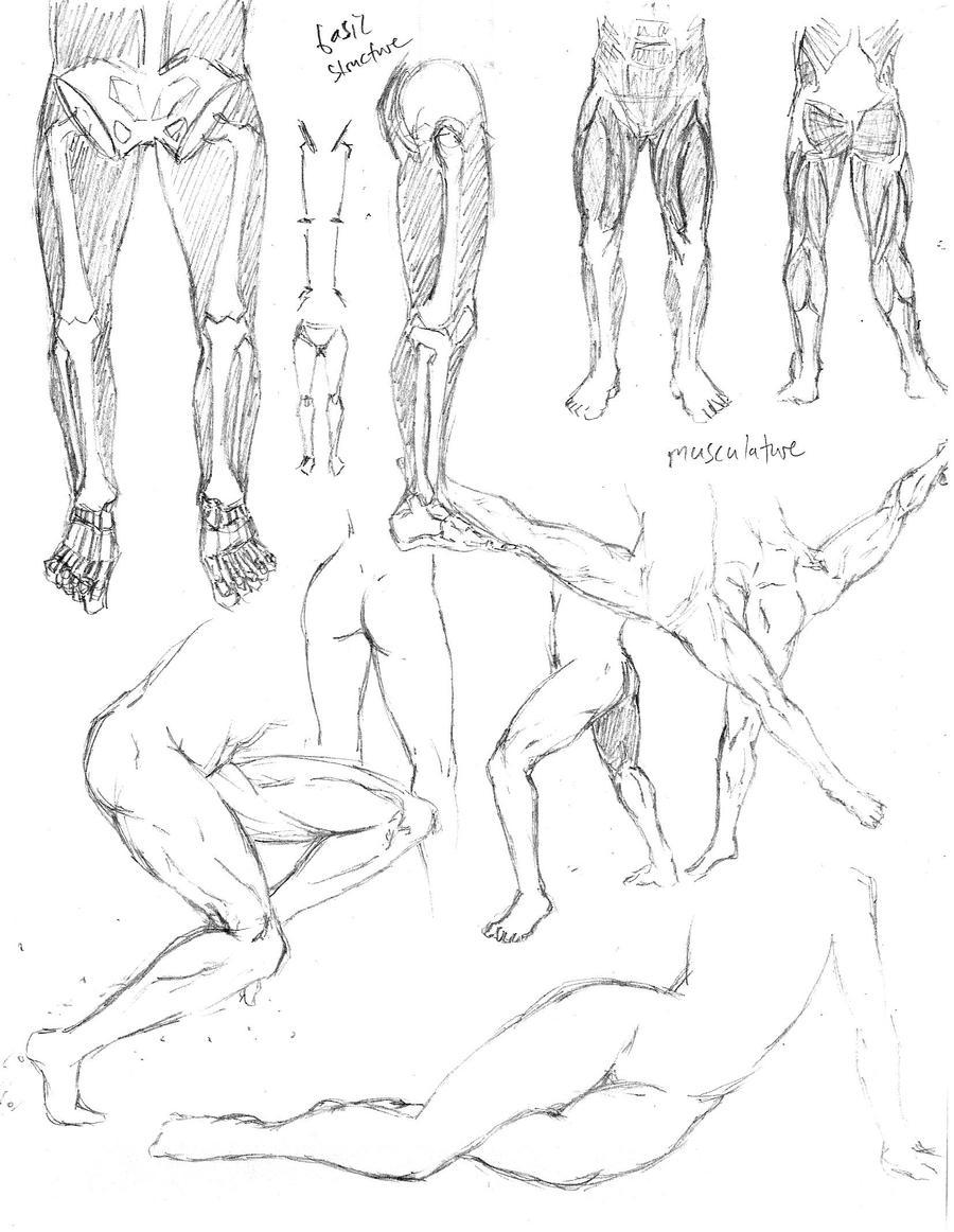Leg Anatomy 1 by shinsengumi77