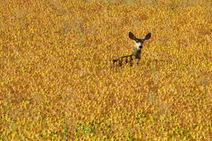 Oh Deer by Iamidaho