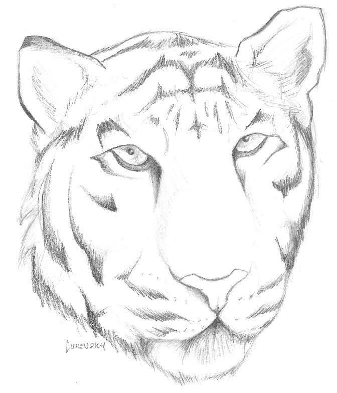 Line Drawing Of A Tiger S Face : Tiger face by guilen on deviantart